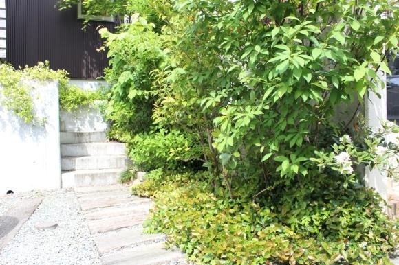テイカカヅラ・シャリンバイの花_c0310571_06444974.jpg