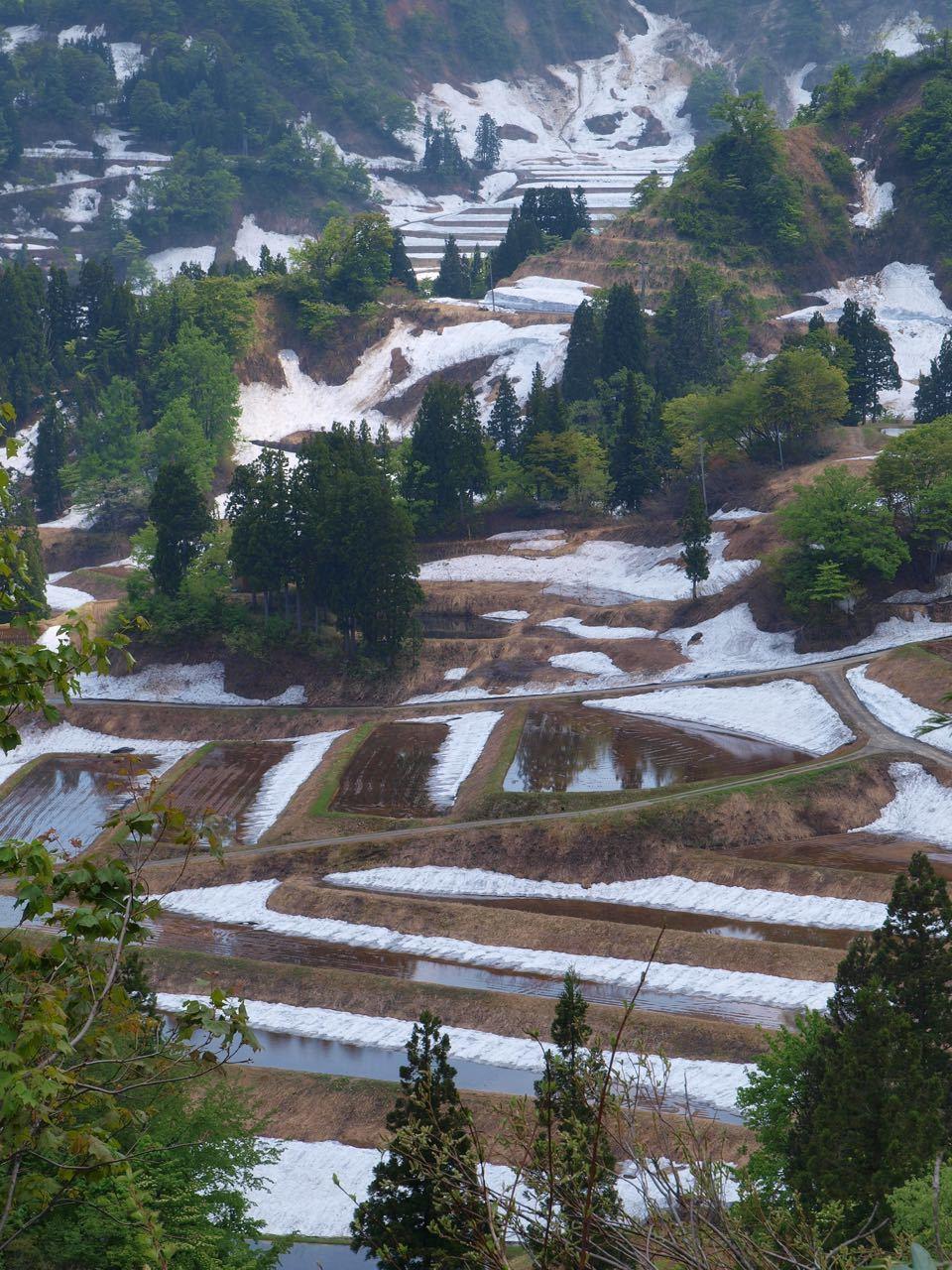 残雪の棚田_a0025576_15383864.jpg