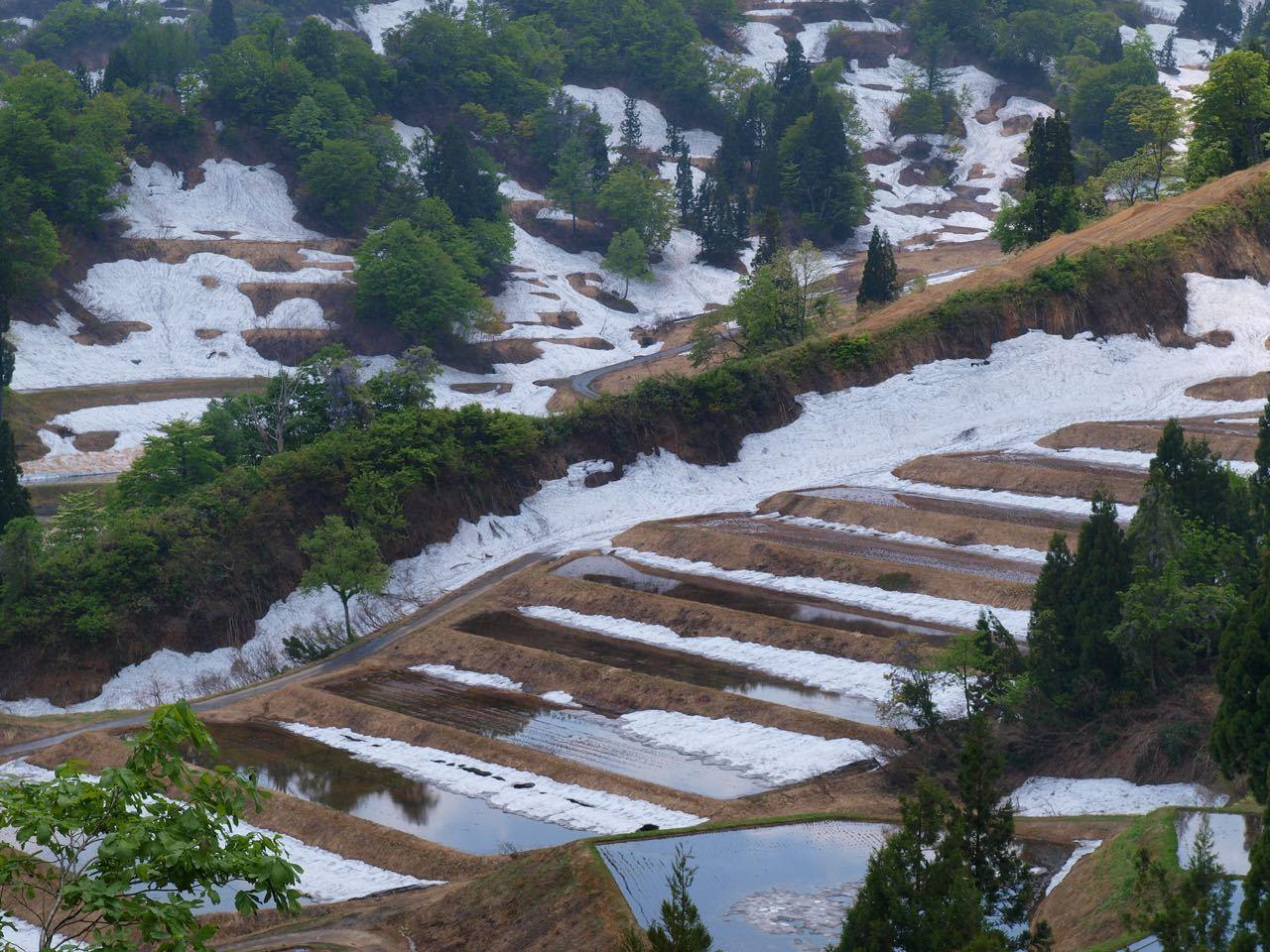 残雪の棚田_a0025576_15384305.jpg