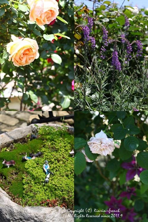 薔薇の咲く楽園へ・・・ange village_e0237680_18122926.jpg