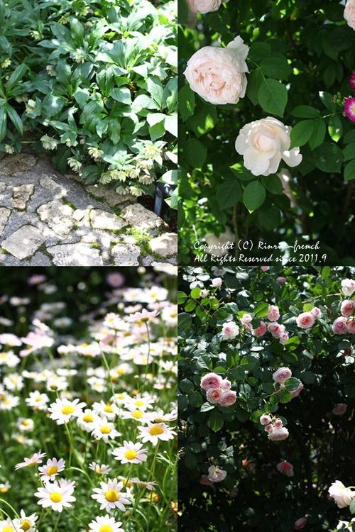 薔薇の咲く楽園へ・・・ange village_e0237680_18134480.jpg