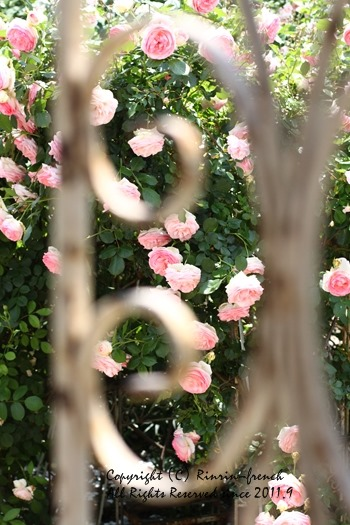 薔薇の咲く楽園へ・・・ange village_e0237680_1822140.jpg