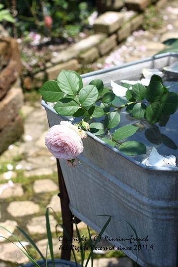 薔薇の咲く楽園へ・・・ange village_e0237680_18221584.jpg