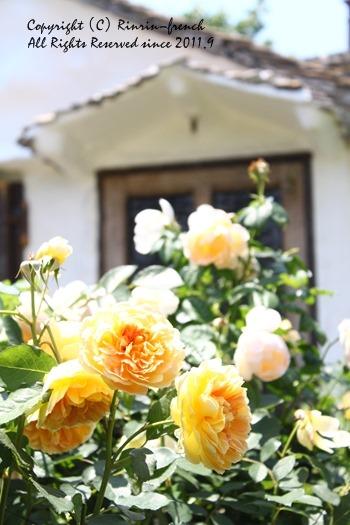 薔薇の咲く楽園へ・・・ange village_e0237680_1872419.jpg