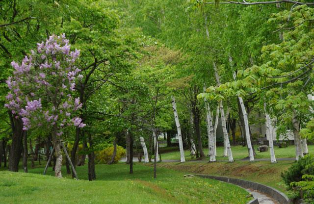 西野緑道公園散策_d0162994_83343.jpg