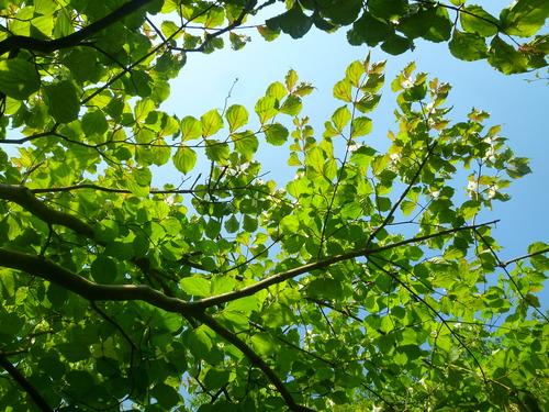 もう台風が過ぎて行った… 陽の光、木の影。_d0087595_1158764.jpg