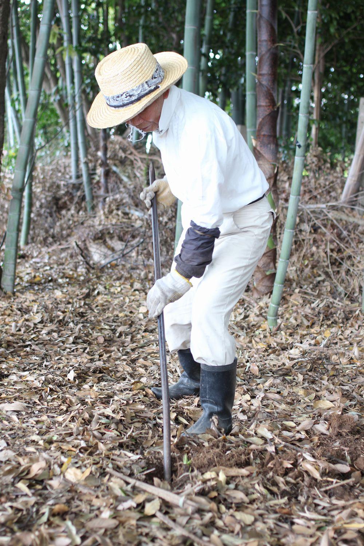 タケノコ掘りに行きました・・・・_b0093830_1851163.jpg