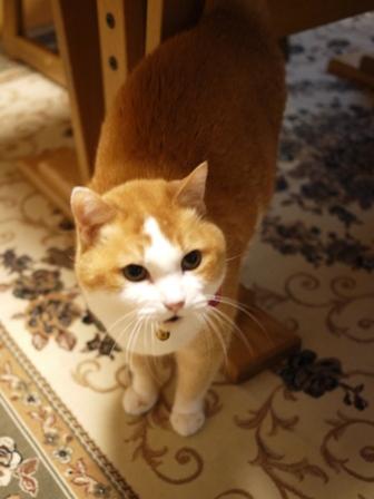 猫のお留守番 ふくちゃん編。_a0143140_21204458.jpg