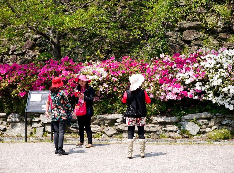 つつじ咲く和歌山城公園_b0093754_19434692.jpg