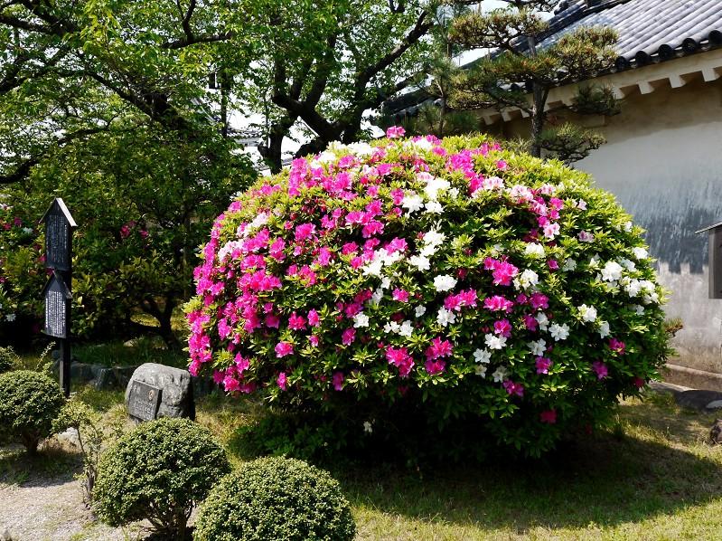 つつじ咲く和歌山城公園_b0093754_1944299.jpg