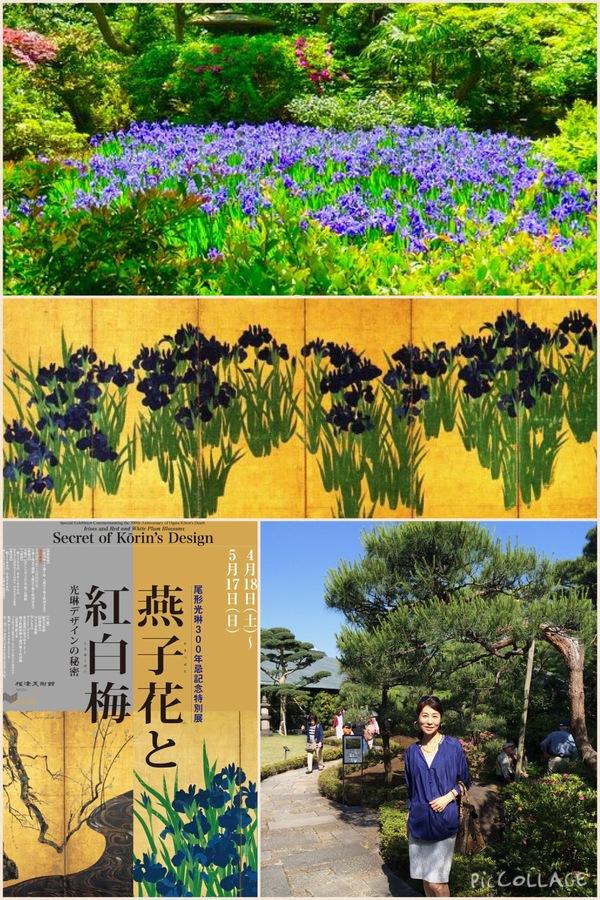 根津美術館「燕子花図屏風」と庭園の燕子花_a0138976_1718114.jpg