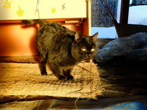 ある冬の日の猫たち_a0180681_0201544.jpg