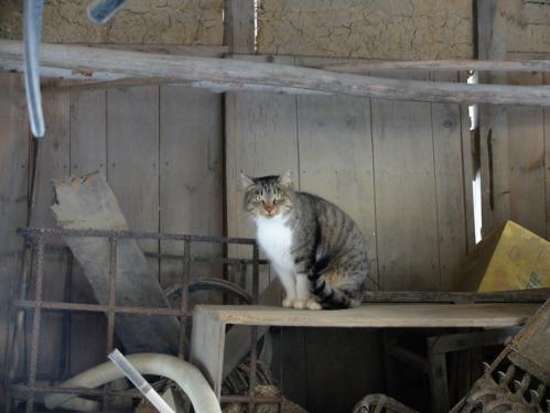 ある冬の日の猫たち_a0180681_0203534.jpg