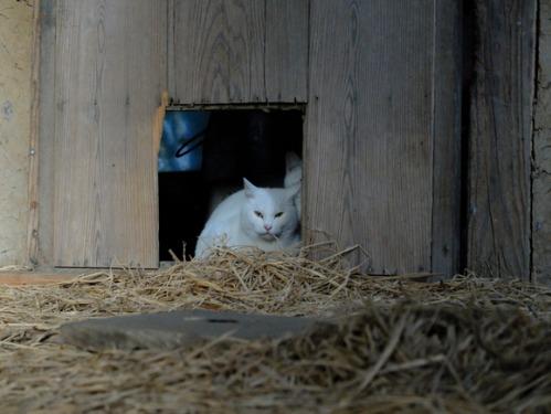 ある冬の日の猫たち_a0180681_0204826.jpg