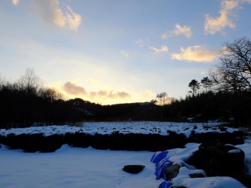 ある冬の日の猫たち_a0180681_0211566.jpg