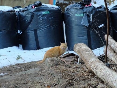 ある冬の日の猫たち_a0180681_021186.jpg