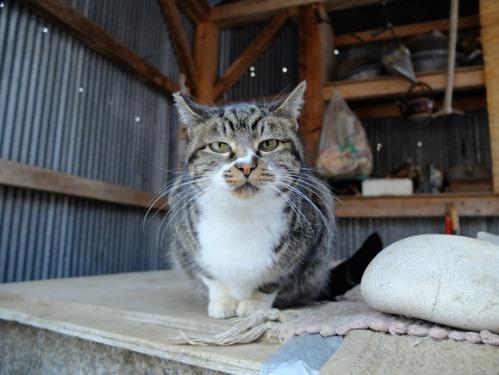 ある冬の日の猫たち_a0180681_0212288.jpg