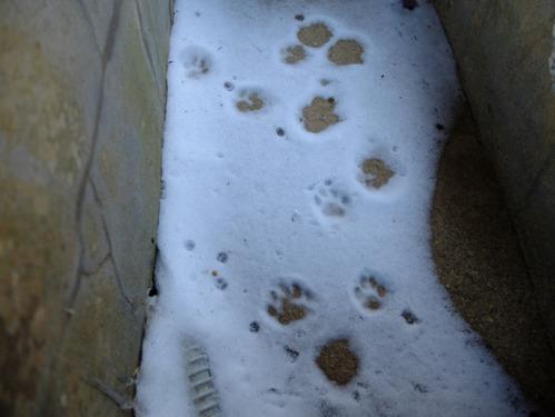 ある冬の日の猫たち_a0180681_0212792.jpg