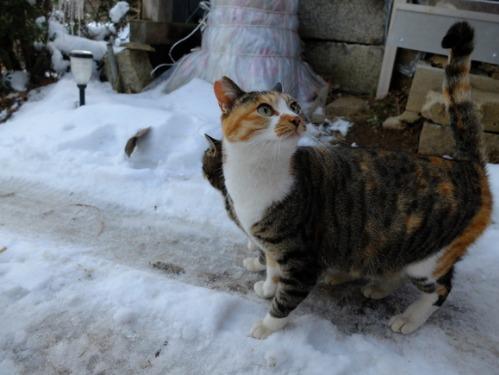 ある冬の日の猫たち_a0180681_0214678.jpg