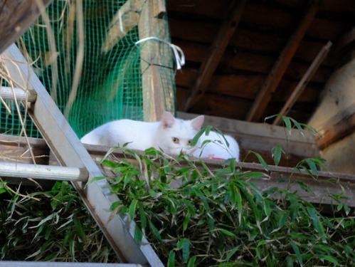 ある冬の日の猫たち_a0180681_021939.jpg