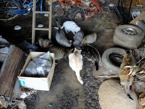 ある冬の日の猫たち_a0180681_0241478.jpg