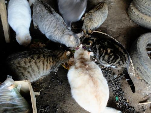 ある冬の日の猫たち_a0180681_0242493.jpg