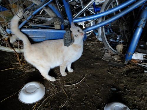 ある冬の日の猫たち_a0180681_0243533.jpg