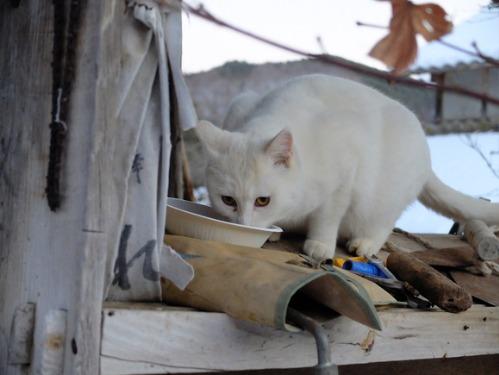ある冬の日の猫たち_a0180681_0244444.jpg