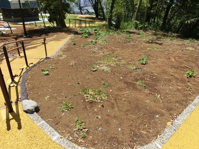 これから重要になる吉原公園・東泉院広場の維持管理と活用_f0141310_6553012.jpg