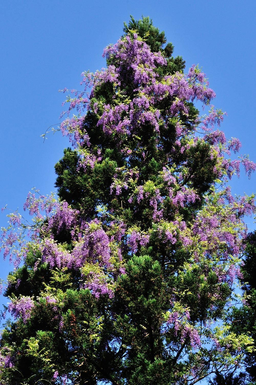 花をまとった緑樹_c0220824_11422228.jpg