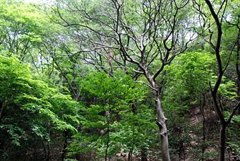 稲葉和裕ブルーグラス・キャンプ 明日開幕!_e0103024_18134897.jpg