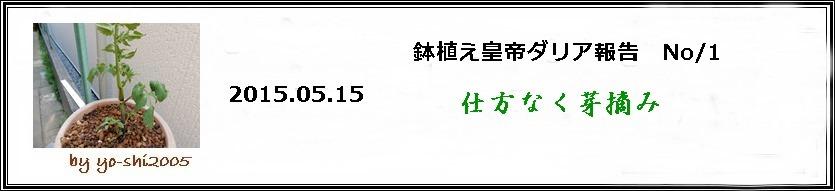 e0033229_2025291.jpg