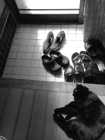 20151110 #黒猫_d0176130_2317542.jpg