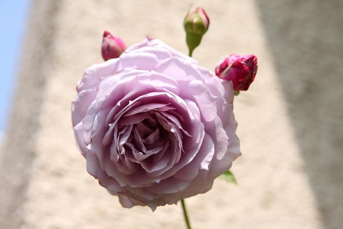 f0201170_1955411.jpg