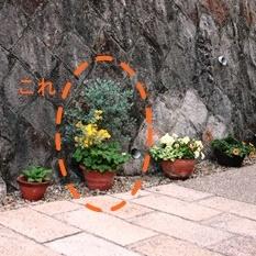 「母の日げ」と多肉植物_a0263675_2011664.jpg