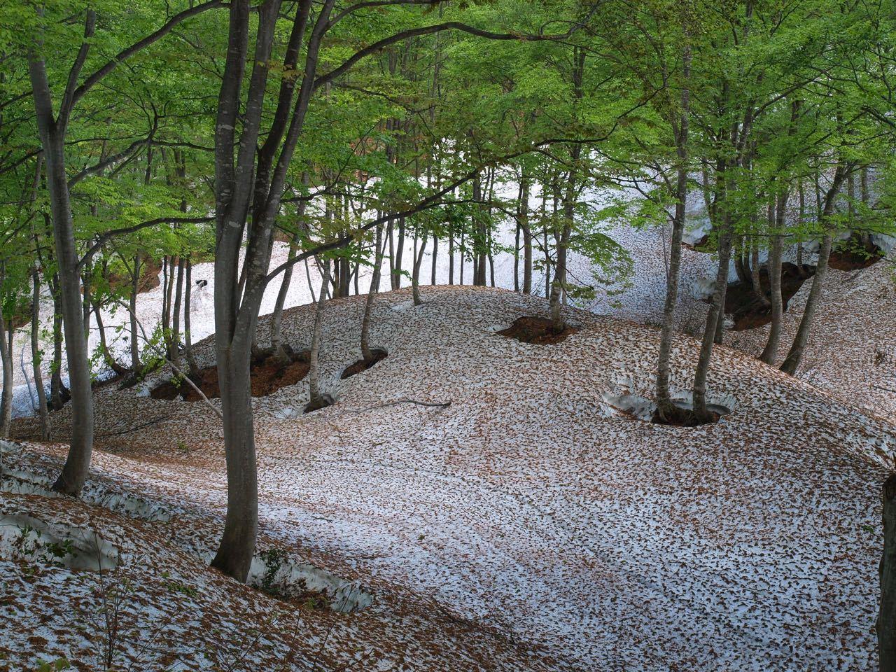 高原のブナの森_a0025576_08092301.jpg