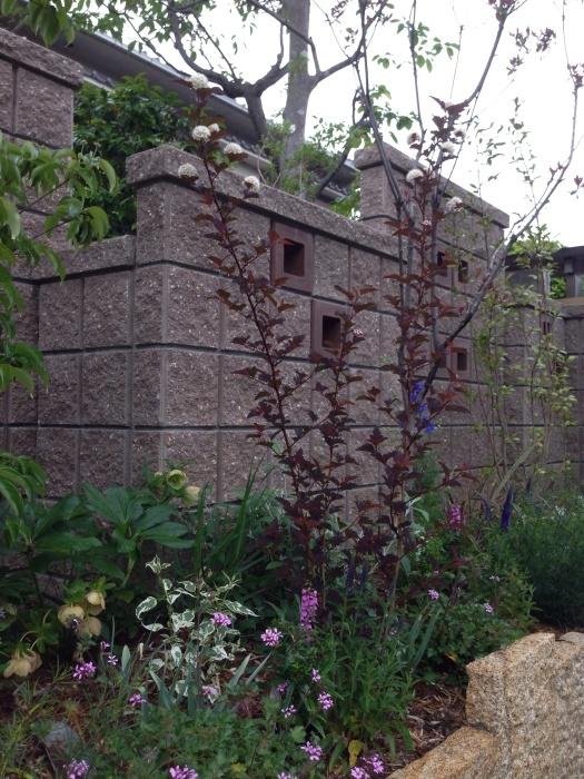 春のお手入れと庭の花_a0233896_14490409.jpg