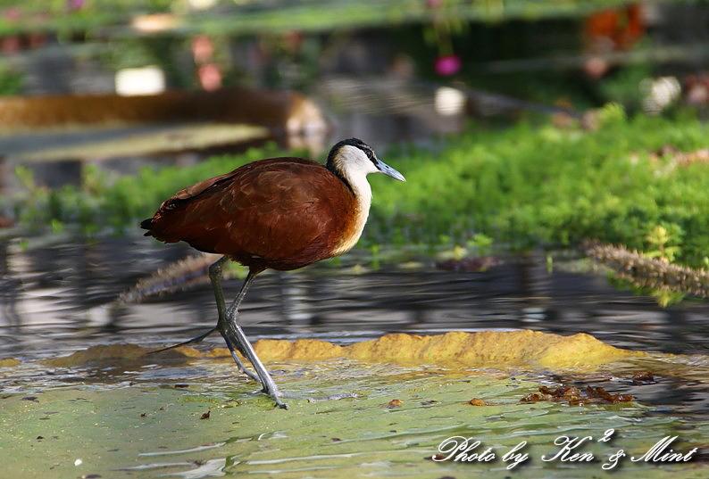 たまには のんびり鳥撮りを・・_e0218518_16474482.jpg