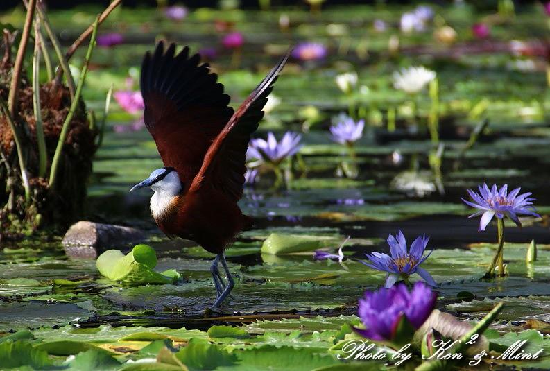 たまには のんびり鳥撮りを・・_e0218518_16475777.jpg