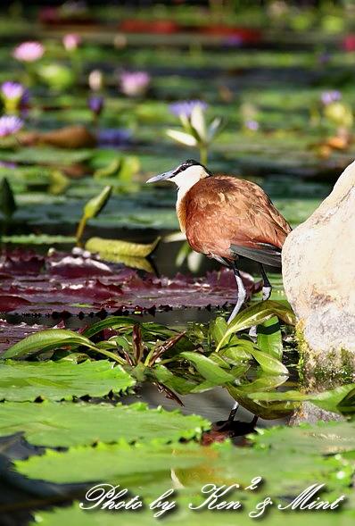 たまには のんびり鳥撮りを・・_e0218518_16481178.jpg