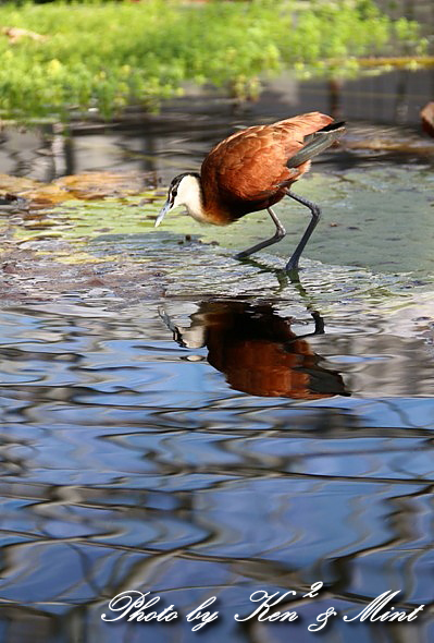 たまには のんびり鳥撮りを・・_e0218518_16482348.jpg