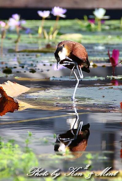 たまには のんびり鳥撮りを・・_e0218518_16483157.jpg
