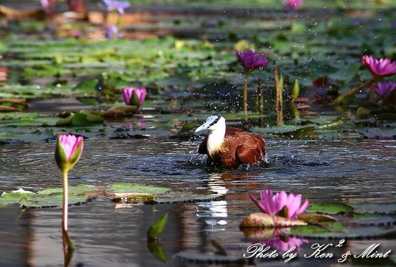 たまには のんびり鳥撮りを・・_e0218518_1648563.jpg