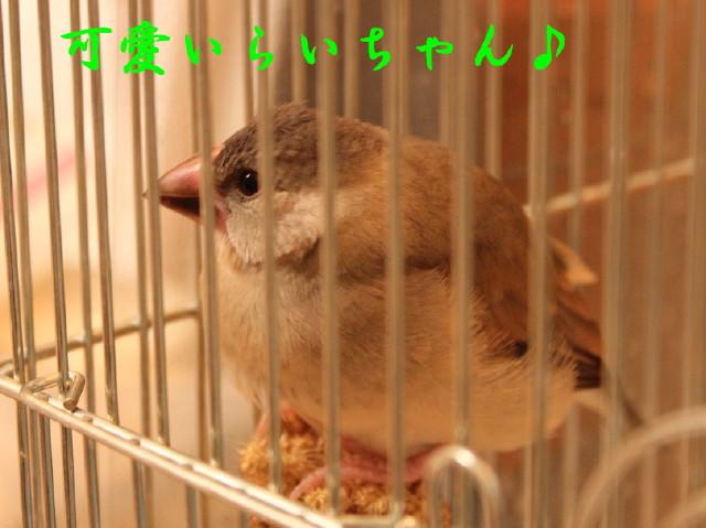 c0365734_20573609.jpg