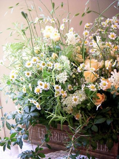 お花畑。。。_a0229658_20455552.jpg