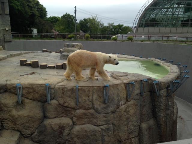 札幌円山動物園_b0236665_08172033.png