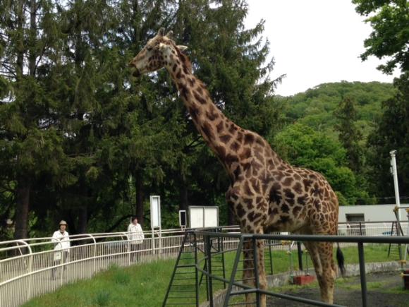 札幌円山動物園_b0236665_08173593.png