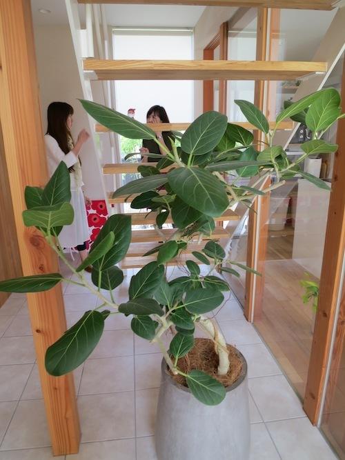 momoのお庭づくりまとめ_f0324766_17511955.jpg