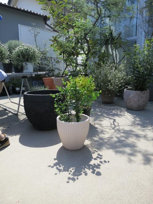 momoのお庭づくりまとめ_f0324766_17513141.jpg