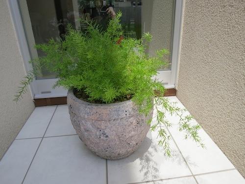 momoのお庭づくりまとめ_f0324766_17520304.jpg